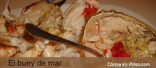 Buey de mar c mo abrir y preparar cocina en video - Como cocinar un buey de mar ...